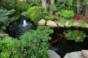 fountain-koi-fish-garden-koi-pond-meditation-garden-self-realization-fellowship-encinitas-california-usa